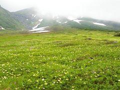 花の旭岳ハイキング