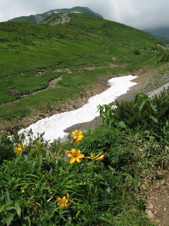 「白馬Alps花三昧」の美しいパンフレットに惹かれ、日頃登山とは無縁の生活をしているくせに八方尾根自然研究路のトレッキングに挑戦しました。<br /><br />登山の難易度がどの程度かさっぱり見当がつかないうえ、同行する母が「登山だ登山だ」と不安がるので白馬村観光局で実施している「白馬マイスターと行く八方ネイチャーウォーク」に申し込みました。<br /><br />結果的にはそんなに大騒ぎするほど大変な山ではなかったのですが、さまざまな高山植物の名前を教えてもらいながらゆっくり登ることができ、非常に良かったと思います。<br /><br />しかしながらせっかく教えてもらった花の名前も、家に帰る頃にはかなり忘れており、結局本で調べながら名前をつける羽目になりました。それも間違っているかも知れませんので、お気づきの方はご指摘いただけると幸いです。<br />