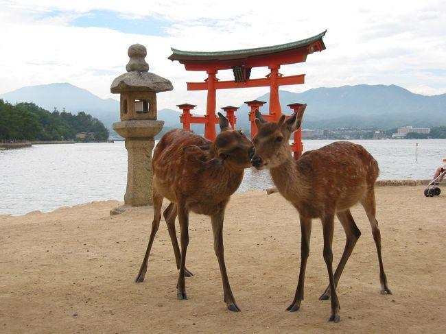 宮島へ渡り、厳島神社の参拝、シカにも挨拶(笑)