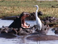 アフリカ南部の旅?象とカバの楽園~チョベサファリ