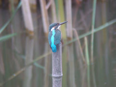 東京港野鳥公園でバードウォッチング [2008](1)