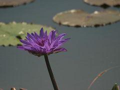 京都府立植物園の花を探して