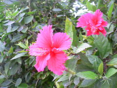 2008年 夏旅行 沖縄の旅 NO.3