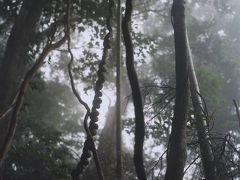御蔵島で、森歩き。