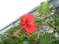 2004年 沖縄本島3泊4日の思い出(観光編)