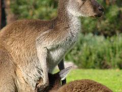 西オーストラリアでワインを飲もう(4) ヤンチャップ国立公園編 2008年7月