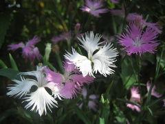 神代植物公園じっくり再訪&深大寺めぐり(1)しみじみとゆかしい秋の花
