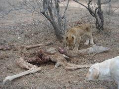 アフリカ南部の旅⑨狩りの標的は…ラストサファリ