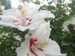 神代植物公園じっくり再訪&深大寺めぐり(2)秋らしさを超越した華やかな花たち