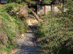京都漫ろ歩き~ 萩の寺から梨木神社
