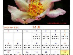 里海画報~10月の暦~山茶花