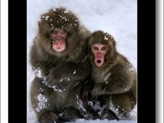 Solitary Journey[お猿さん特別編]雪景色の中に生息しているニホンザル。野猿たちの表情を切り撮る。<越冬!神庭のサル>岡山県真庭市