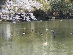 不忍池でバードウォッチング [2002](1) 珍鳥アカツクシガモ編