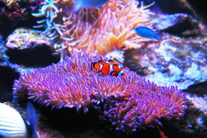シーライフ シドニー水族館