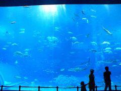 沖縄旅その6★美ら海水族館(いろんな水槽編)