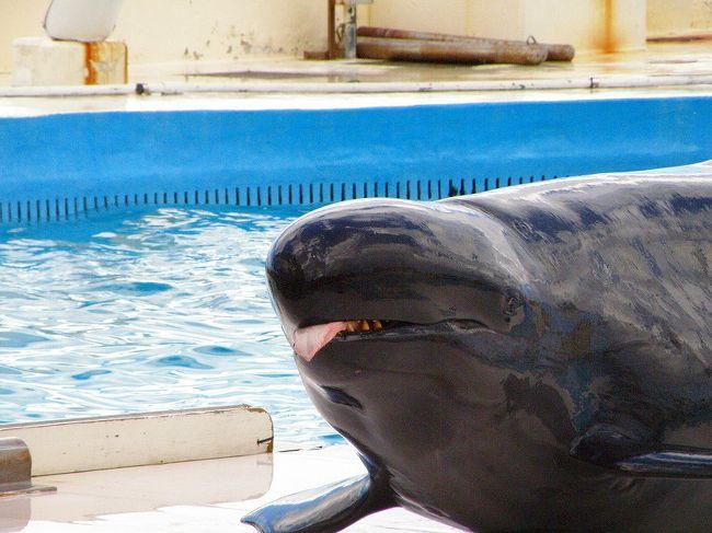美ら海水族館を堪能したあと、同じ海洋博公園内の「オキちゃん劇場」と「マナティー館」に行きました。この2つは、水族館からさらに海側の1段低いころに建てられていて、すぐそこに沖縄の美しい海があるというなんともすごい立地でした^^両方とも無料(!)で、大掛かりなイルカのショーや珍海獣であるマナティーをじっくり見ることができました。<br />特に、オキちゃん劇場のイルカのショーはすごい人で、ショーが始まる15分くらい前に行ったんですが、平日にも関わらず席が満杯に近く、「土日はどうするんやろか〜。。。」とちょっと疑問に思ってしまいました。ただ平日なので修学旅行か遠足と思われる小・中学生がけっこういたので(インターナショナルスクールの生徒も!)、土日とはちょっと客層がちがうのかなぁとも思いました。<br />このほかにもすぐ近いところに「イルカラグーン」というイルカのショーやふれあい体験、観察会をやっている建物がありました。私たちは閉まっていると思い込みスルー。あとでわかったんですが、ちゃんと開いていたみたいです。。。でも、オキちゃん劇場だけでも十分イルカたちを堪能できました^^<br />時間の都合で行くか行くまいか考える方もいらっしゃると思うので、詳しい目にアップしておきます^^