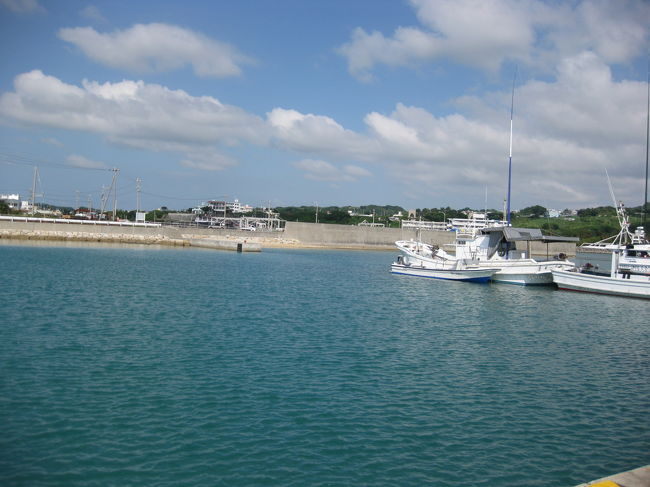 きれいな海でアオリイカに会いに行ってきました!
