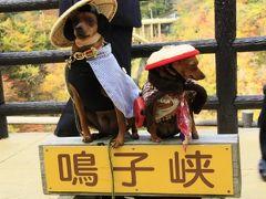 宮城・鳴子峡・紅葉盛んな新遊歩道を歩く