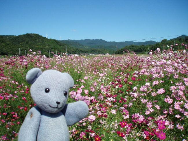 秋桜、好きです。<br />普段はイベントには近付かない主義なんですが、たまたま朝新聞に豊浦リフレッシュパークのコスモス祭りの記事と写真が載っていたもので、一面のコスモス見たさに参戦。<br /><br />のつもりでしたが、他で楽しむこととなったのでした。<br /><br />(作成中)