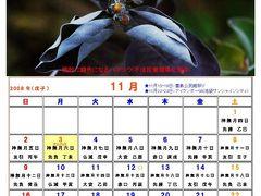 里海画報 暦(08/11)
