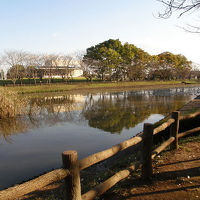 乙戸沼公園でバードウォッチング [2008](1)