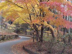 御野立公園の紅葉