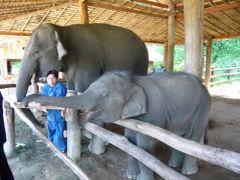 1年ぶりに象保護センターに行ってきましたぁ。