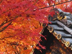 京都('08 紅葉狩り)