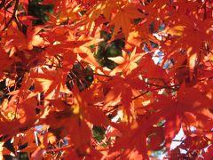 2008年・京都ふたたび秋の紅葉