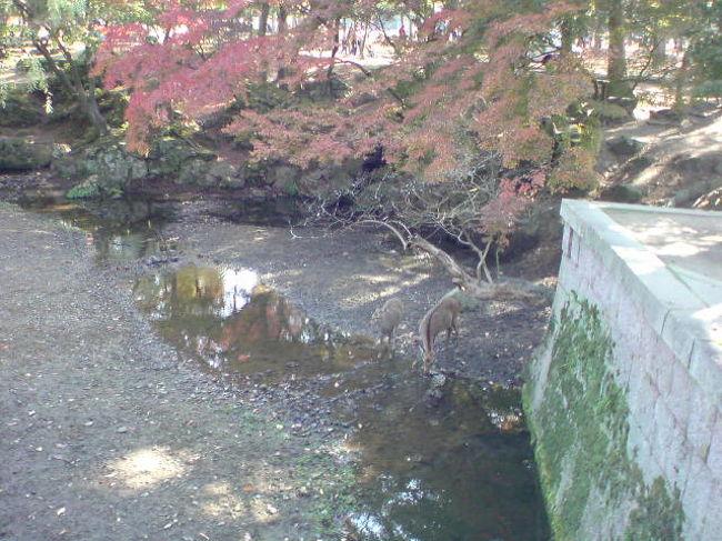 母の親戚のところに遊びに行きました。みんなで元気に遊びに行けることもそうないだろうし。ゆっくり紅葉を見に行きました。<br />息子にとっては。はじめての奈良。いい思い出になったかな。