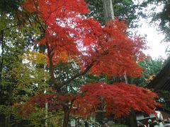 琵琶湖東の紅葉