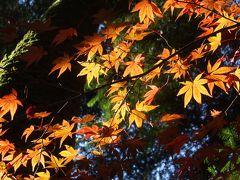 秋の京都・滋賀~①京都、岩倉実相院