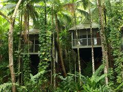 ケアンズ熱帯雨林ドライブ(3) デインツリー国立公園編 2008年11月