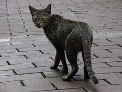 たっぷり台湾旅日記6 鹿港天后宮と案内猫篇
