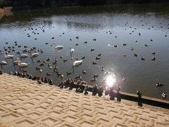 古徳沼でバードウォッチング [2009](1)