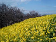 海を見渡す菜の花畑と小田原梅まつり 2009