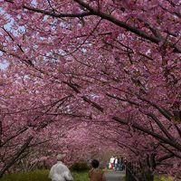 春を感じに・・・河津へお花見