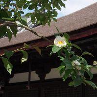 タンデムで鶴林寺へ ~七つの謎を探せ!~