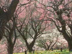 早春フェスタの森林公園(2)5分咲きでも溜め息が漏れた梅林