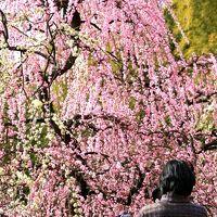 名古屋◆街ある記 しだれ梅の咲く農業センター 2009