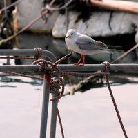 原チャでゴー第51弾−ポーニョポニョポニョ魚の子 鞆の浦春間近編−
