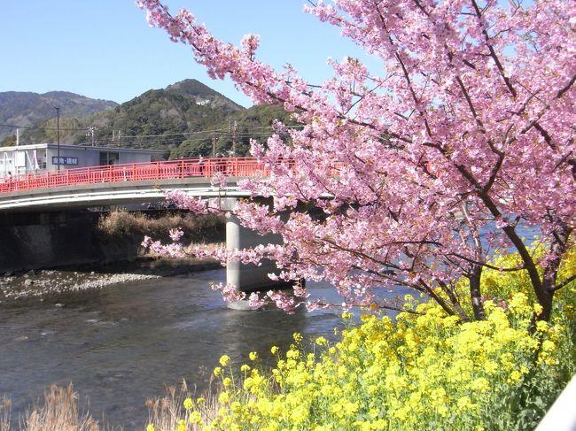日々の仕事疲れを癒したかったのと代休消化の為、2月に近場で温泉も観光も楽しめるところという事で河津温泉郷と河津桜祭(http://www.kawazu-onsen.com/)への旅行を決めました。<br />近くにあるカピバラとふれあえる伊豆バイオパークがあるのも決め手の一つ。<br /><br />昼間だけじゃなくライトアップされるという夜桜も見たかったので、日帰りではなく河津で一泊することに。<br />