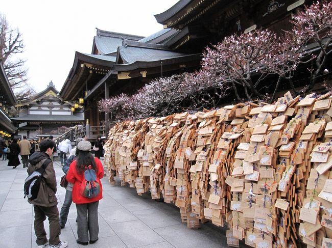 梅の開花の便りを聞いて、湯島天神に梅を観に行きました。<br />梅の種類によって、開花時期が違うようで、梅の花はまだら模様で咲いていました。<br />このあたりは見所が徒歩圏内に点在していて、岩崎邸、不忍池、寛永寺、根津神社(ツツジの名所)、アメ横商店街はみな歩いて行けます。<br />このあたりはコーヒー豆の焙煎店がたまにあって、ちょっと一休みに最適です。<br />受験シーズンのこの時期、梅見以上に合格祈願に訪れる方が多く、境内は大賑わいでした。