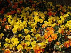Floral Garden ANGE ~2009 淡春~