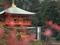 雨後の霧 梅の花咲く 那智の滝。熊野大社より望む『日本三大滝』『日本の滝百選』