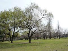もう春だぁー公園に散歩しに行こう☆(春日公園・大宰府歴史スポーツ公園)