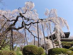 京都('09 花見)