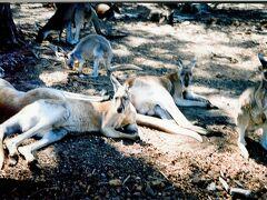 西オーストラリア州、パース近辺とファームステイ