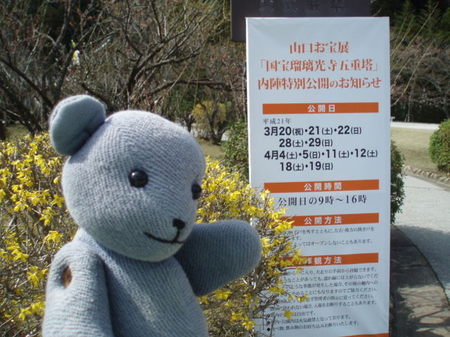 2009年のボランティアガイドが始まりました。<br />スタートは、山口お宝展と重なりました。<br />さて、今年はどんなことが起こるのでしょうか?<br />※この旅行記というかガイド日記は、ほぼ年度で区切っています。<br />当番のスケジュールが3月下旬から翌3月になってたもので。<br />2010年3月22日で2009年終了・・・と思ったら急きょ追加で3月28日終了予定。<br /><br />これまでの記録<br />2004年(4トラ登録記念に作成♪)<br />http://4travel.jp/traveler/yamakuni/album/10008663<br />2005年(公園の工事と在りし日のカン君編)<br />http://4travel.jp/traveler/yamakuni/album/10019058/<br />2006年(お宝展の開始と国民文化祭編)<br />http://4travel.jp/traveler/yamakuni/album/10051018<br />2007年(他にも行事が色々編)<br />http://4travel.jp/traveler/yamakuni/album/10136285/<br />2008年(ガイド拡大?編)<br />http://4travel.jp/traveler/yamakuni/album/10237546/