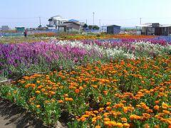 花の房総半島一周